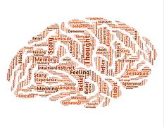 brain-544403__180